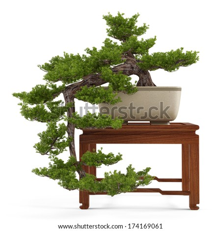 Bonsai pine tree in a pot - stock photo