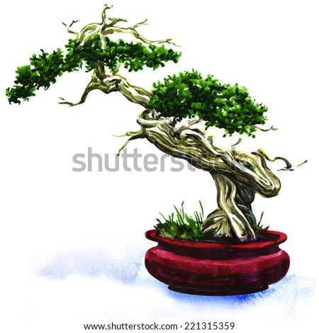 Bonsai pine tree isolated - stock photo
