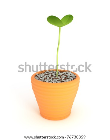 bonsai plant in pot Isolated over white - stock photo