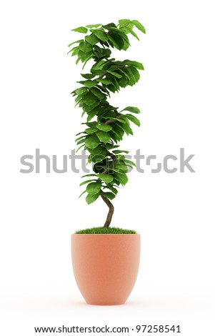 bonsai plant in  pot Isolated over white