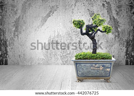 Bonsai pots are placed on a wooden background cement. - stock photo