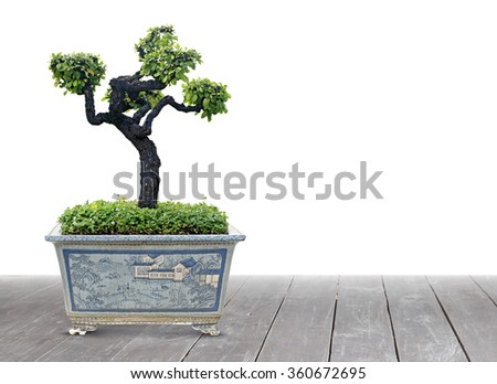 Bonsai pots are placed on wooden floors, white background - stock photo