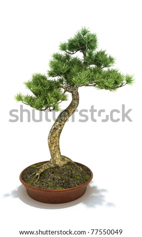 Bonsai potted tree isolated on a white background, 3d model. 300 D.P.I - stock photo