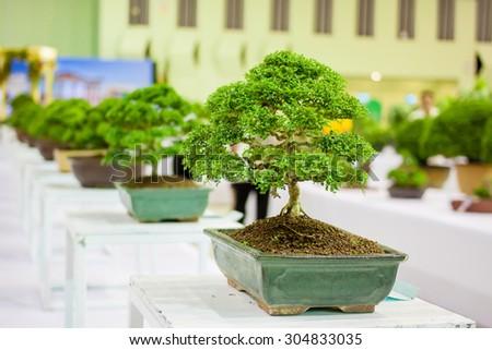 Bonsai tree Bonsai Exhibition - stock photo