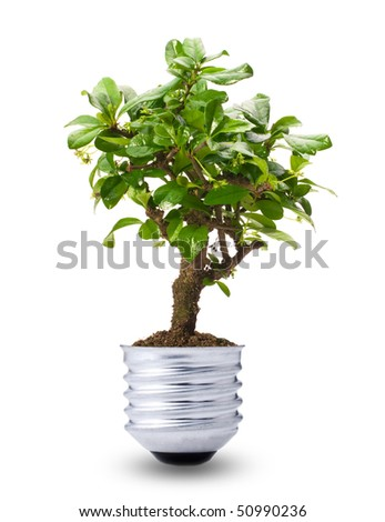 bonsai tree growing in a lightbulb base - stock photo