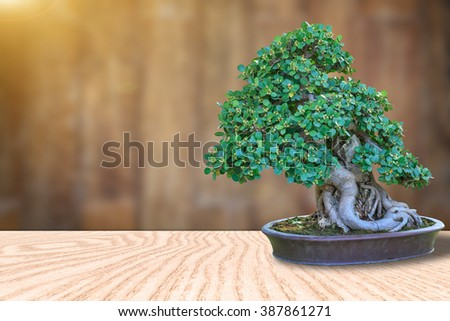 Bonsai tree in a ceramic pot on a wooden floor and blurred wooden background for design with copy space for text or image. - stock photo