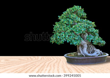 Bonsai tree in a ceramic pot on a wooden floor with black background for design with copy space for text or image. - stock photo