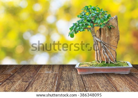 Bonsai tree in a ceramic pot on a wooden floor with blurred bokeh background for design with copy space for text or image. - stock photo