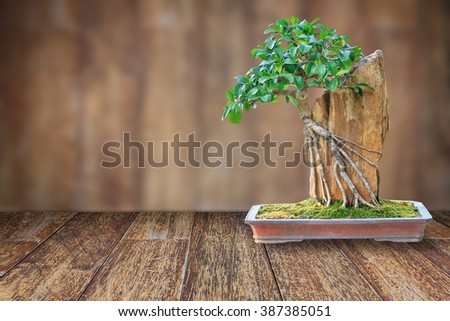 Bonsai tree in a ceramic pot on a wooden floor with blurred wooden background for design with copy space for text or image. - stock photo