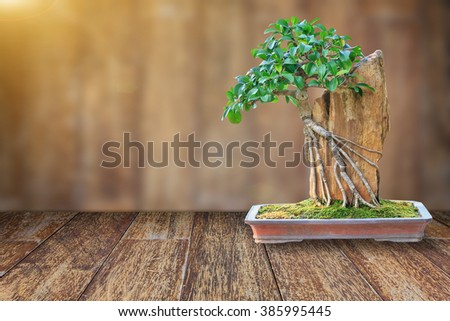 Bonsai tree in a ceramic pot on wooden floor with blurred wooden background and lens flare for design with copy space for text or image. - stock photo