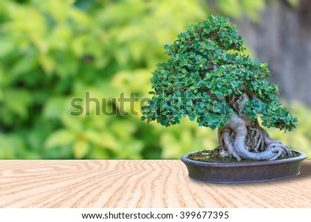 Bonsai tree in a ceramic pot on wooden floor with natural green blurred background for design with copy space for text or image. - stock photo