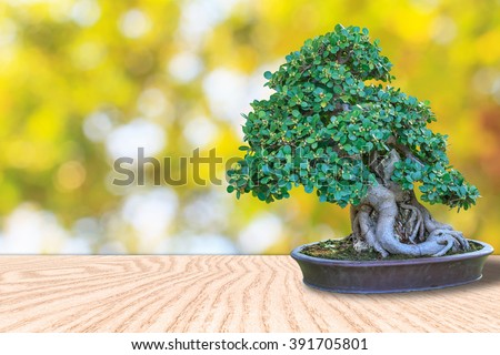 Bonsai tree in a ceramic pot on wooden floor with nature blurred bokeh background for design with copy space for text or image. - stock photo