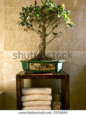 bonsai tree in bathroom - stock photo