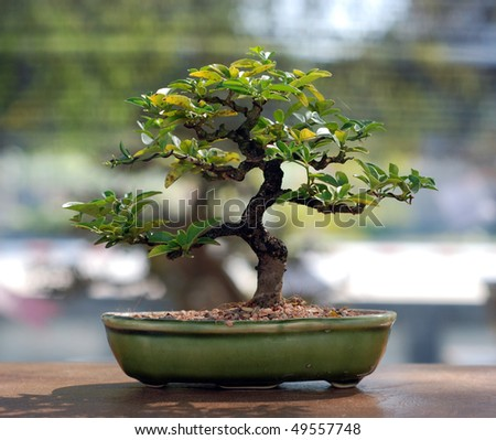 Bonsai tree in jade pot - stock photo