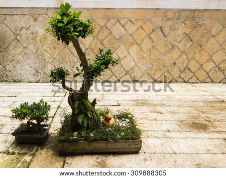 Bonsai tree in pot - stock photo