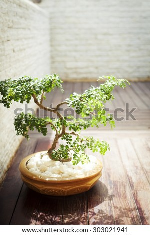 Bonsai tree in sunlight. Copy space - stock photo