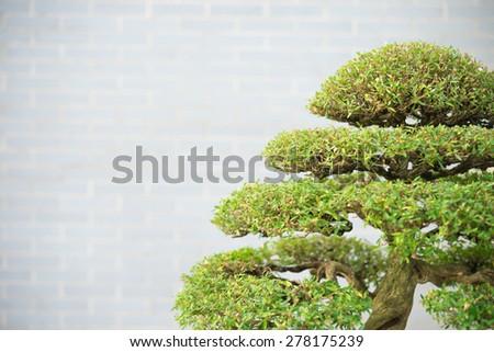 bonsai tree with copy space - stock photo