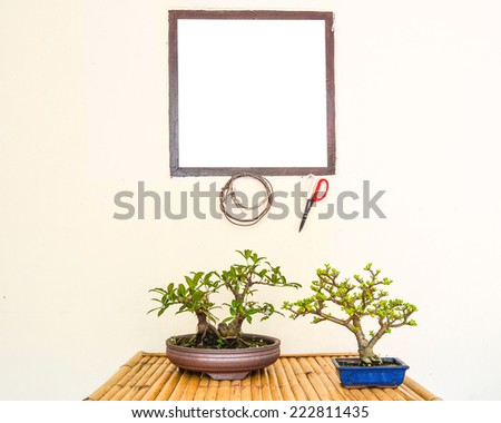 Bonsai tree with tools of the trade - stock photo