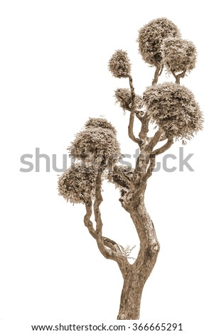 Bonsai trees. - stock photo