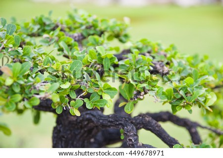 Bonsai trees,selective focus - stock photo