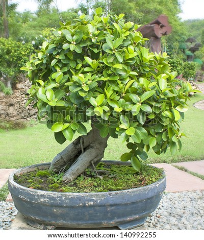 Bonsai trees, small shrubs, greenery in pots.