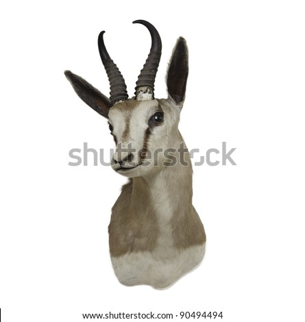 bontebok 's head isolated on white background
