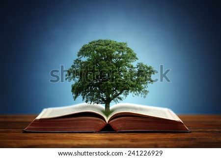 Book or tree of knowledge concept with an oak tree growing from an open book - stock photo