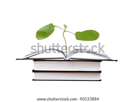 Book with castor oil plant with first leaves