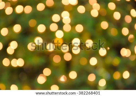 Booked Light golden blurry background with a green tree . Bulbs on  Bush. - stock photo
