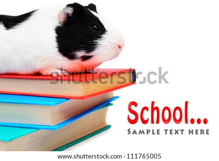 Books and the guinea pig. On a white background. - stock photo