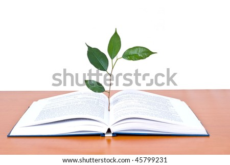 Books and tree isolated on white background