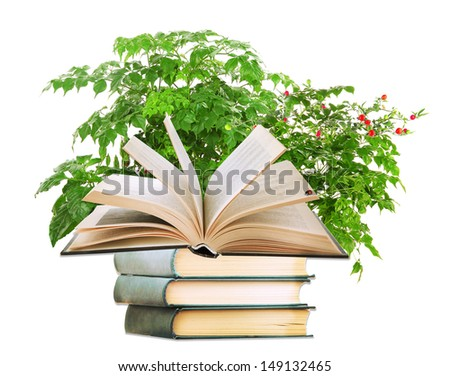 Books with plant isolated on white - stock photo