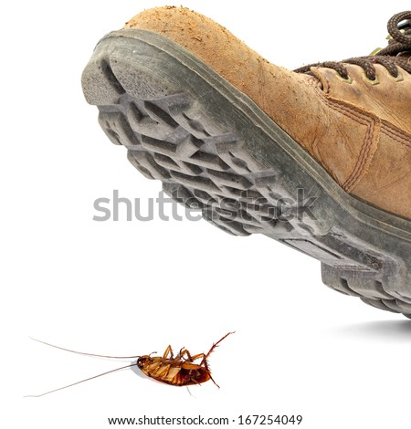Boot steps on a dead cockroach isolated on the white background - Concept of a pest control - stock photo