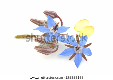 Borage oil - stock photo