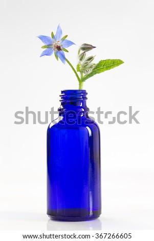 Borage oil, Borago Officinalis - stock photo