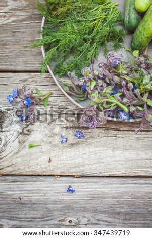 Borage (Starflower), dill and cucumbers  on a wooden board. Above view. Also available in horizontal format. - stock photo