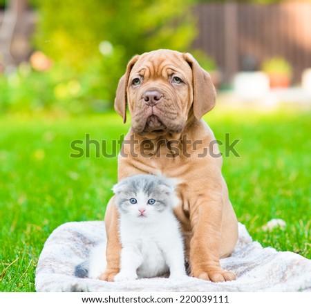 Bordeaux puppy dog hugs newborn kitten on green grass - stock photo