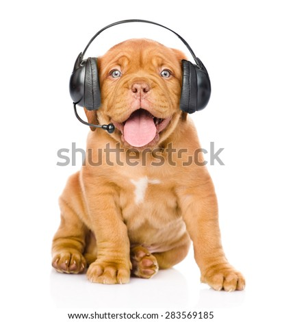 Bordeaux puppy dog with phone headset. isolated on white background - stock photo