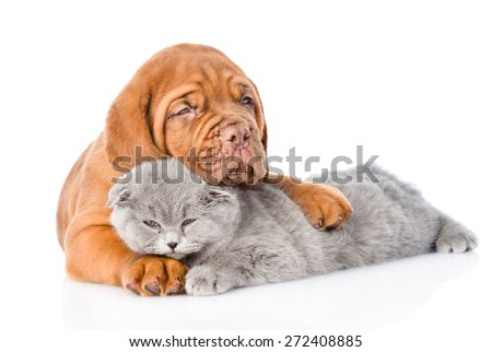 Bordeaux puppy hugs sleeping cat. isolated on white background - stock photo