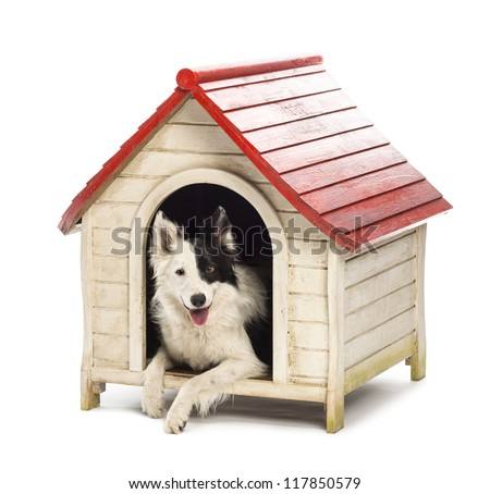 Border Collie in a kennel against white background - stock photo