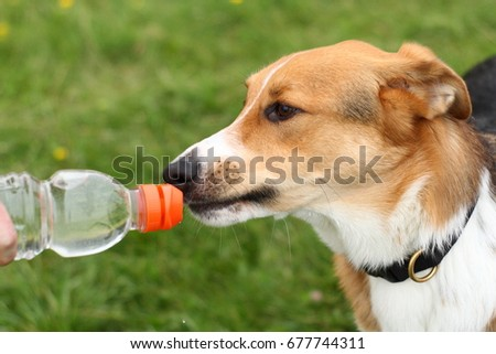 Border Collie Mix Drinking from a bottle