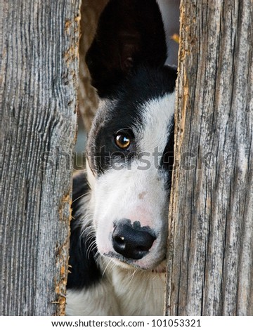 Dog Fence Stock Images Royalty Free Images Amp Vectors