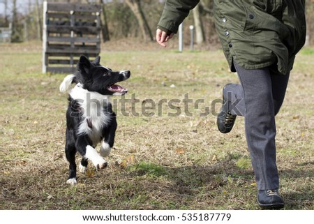 border collie puppy who runs happily