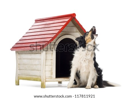 Border Collie sitting and barking next to a kennel against white background - stock photo