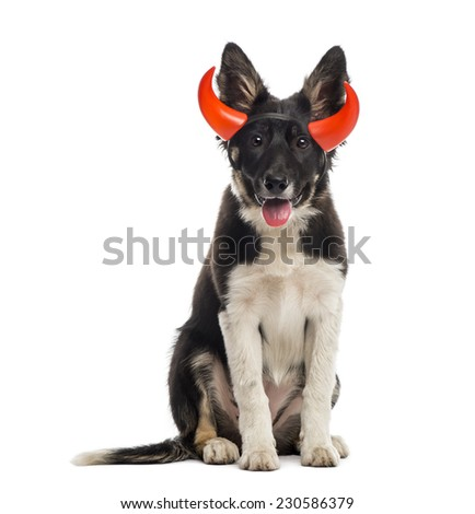 Border collie sitting and wearing a horned headband