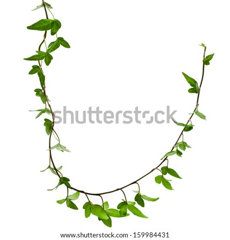 Border Frame made of Green climbing plant, shape heart , isolate - stock photo