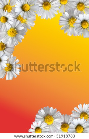Border frame made of isolated daisy flowers