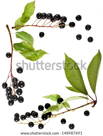 border frame of bird cherry branch with berries top view close up isolated on a white background - stock photo