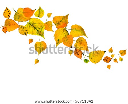 Border Frame of colored autumn leaves falling isolated on white background - stock photo