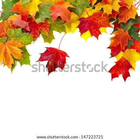 Border Frame of colored falling maple leafs with copy space isolated on white background  - stock photo